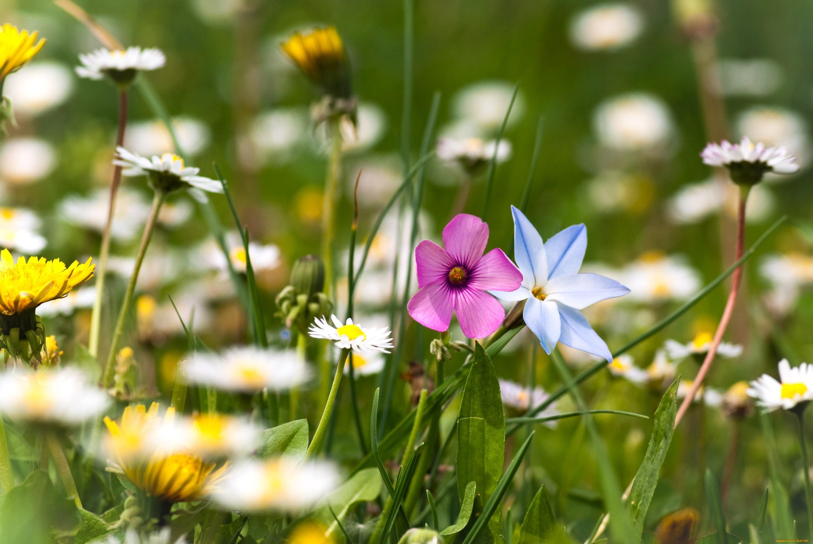 фото полевых цветов в хорошем качестве появления субкультуры эмо